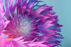Flower with sharp petals close-up, neon lights, purple and turquoise colors.