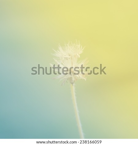 flower with yellow and green color tone in soft style for background - Shutterstock ID 238166059