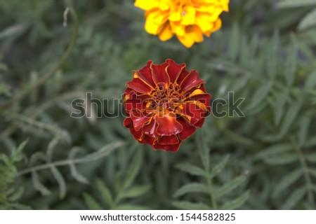 Flower yellow flower red flower gold flower