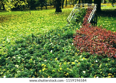 Flowerbed in the form of a village cart. Autumn in the Park and on the streets, defoliation, yellow leaves. Walking along the city streets and alleys of the Park