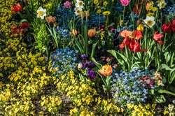 Flowerbed with colorful spring flowers.