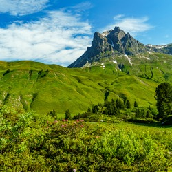 Flowered colored meadows in the alps of Austria, with forests, rocky mountains and steep, stony slopes on a sunny day with veil clouds. the mountain has two peaks in Bregenzerwald, Vorarlberg, Austria