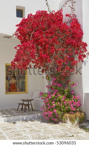 Flowering bougainvillea around the building on the island of Mykonos in Greece