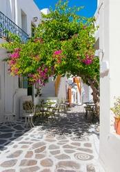 Flowering bougainvillea at restaurant in the town of Mediterranean Sea