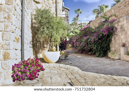 Flowering bougainvillea on ancient streets and stone houses, the ancient city of Jaffa, Israel. Foto stock ©
