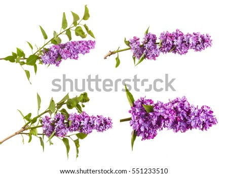 Flowering branch of lilac. isolated on white background. Set