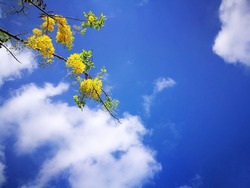 Flowering branch of tree a background of a spring.sky and cloud