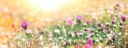 Flowering clower in spring, beautiful nature in meadow