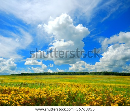Flowering field and blue sky with clouds