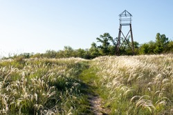 Flowering field of steppe feather grass. White feather grass and the tower.