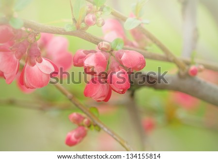 Flowering in April and May - Flowering bud and flower