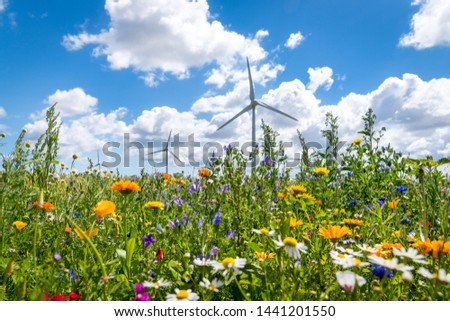 Flowering meadows, flowering field, flowering path to prevent and counter insect death and killing. Wind turbines, wind turbines in the background #1441201550