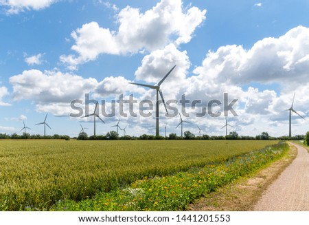 Flowering meadows, flowering field, flowering path to prevent and counter insect death and killing. Wind turbines, wind turbines in the background #1441201553