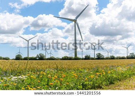 Flowering meadows, flowering field, flowering path to prevent and counter insect death and killing. Wind turbines, wind turbines in the background #1441201556