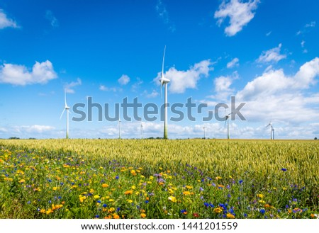 Flowering meadows, flowering field, flowering path to prevent and counter insect death and killing. Wind turbines, wind turbines in the background #1441201559