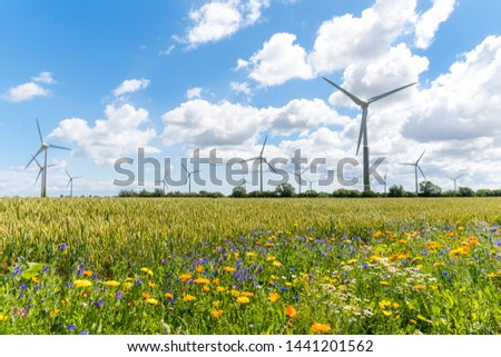 Flowering meadows, flowering field, flowering path to prevent and counter insect death and killing. Wind turbines, wind turbines in the background #1441201562