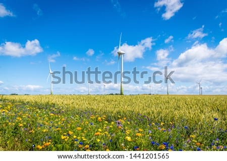 Flowering meadows, flowering field, flowering path to prevent and counter insect death and killing. Wind turbines, wind turbines in the background #1441201565