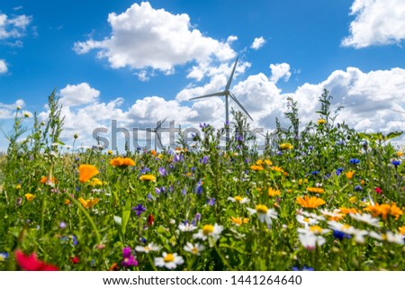 Flowering meadows, flowering field, flowering path to prevent and counter insect death and killing. Wind turbines, wind turbines in the background #1441264640