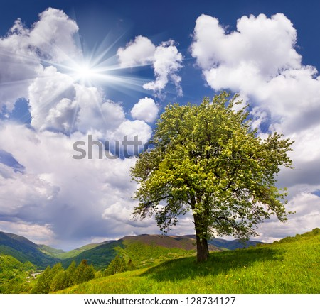 Flowering pear tree in spring in the mountains