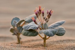 Flowering Plant In A Desert