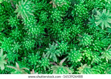 Flowering plants. Ornamental plants. Green plants