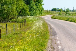 Flowering roadside ditch on a country road in summer
