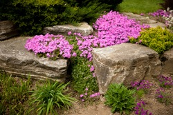 Flowering rock garden in spring. Different bushes and flowers blooming over rock formations in park