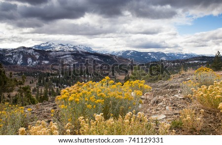 flowering sagebrush in foreground and the snowy eastern sierra mountains in the background under a stormy sky with blue sky peaking through the white clouds.