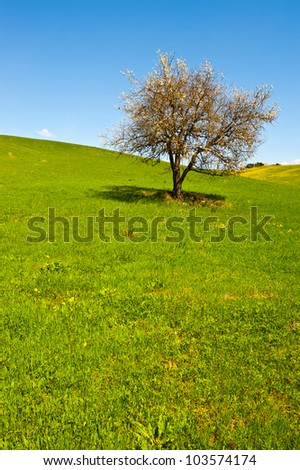 Flowering Tree and Farmhouse Surrounded by Sloping Meadows of Tuscany