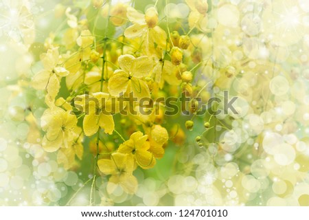 Flowering tree.  Blooming yellow flowers with dew-drops.