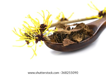 flowering witch hazel (Hamamelis) and a wooden spoon with dried leaves for  homemade herbal cosmetics, isolated with shadow on a white background, close up with selected focus, narrow depth of field #368255090