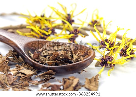 flowering witch hazel (Hamamelis) and wooden spoon with dried leaves for homemade skin care cosmetics and bath additive on a white background, closeup with selected focus, narrow depth of field #368254991