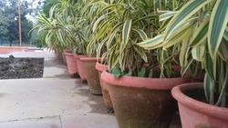 flowerpot of Rajghat new Delhi india