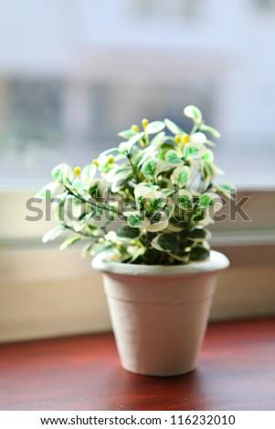 Flowerpot on window sill
