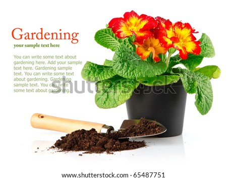 flowerpot with red flowers and soil in shovel isolated on white background