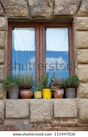 Flowerpots with flowers on the window
