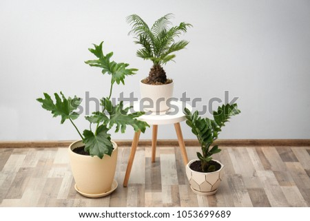 Flowerpots with tropical plants against light wall indoors #1053699689