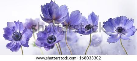 flowers #168033302