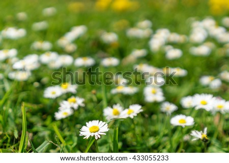 flowers #433055233