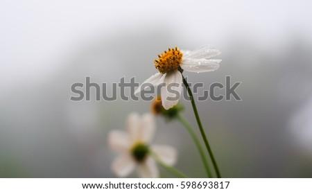 Flowers #598693817
