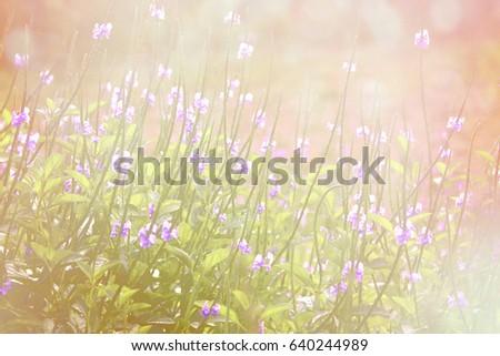 Flowers #640244989