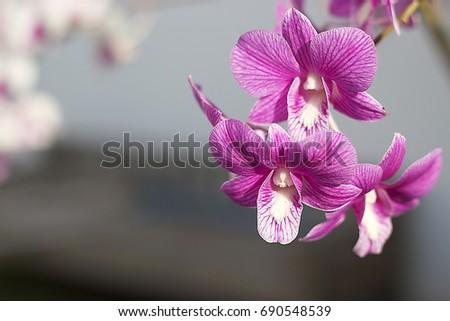 flowers #690548539