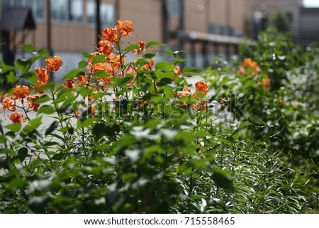 Flowers #715558465