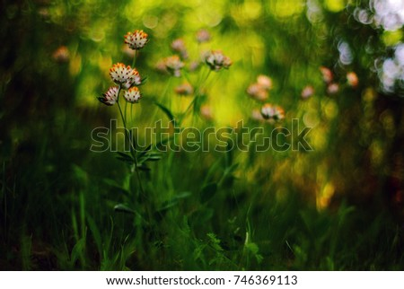 flowers #746369113