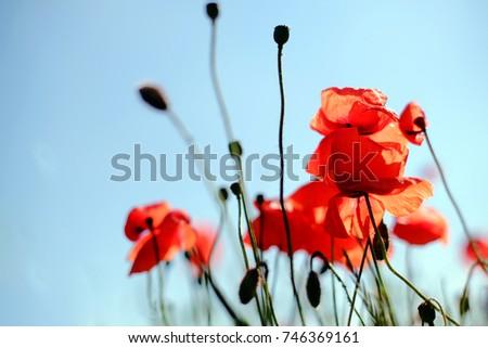flowers #746369161