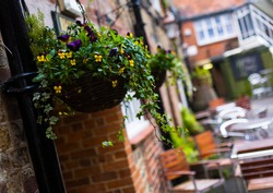 Flowers adorning the outside of a cafe in the county of Wiltshire, England, United Kingdom, Europe