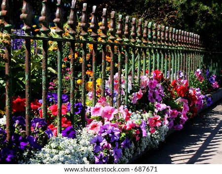 flowers & wrought iron fence - stock photo