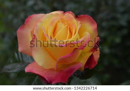 Flowers and background taken in Portland Oregon botanical garden #1342226714
