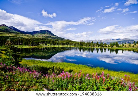 Flowers and blue skies at Little Molas Lake in the San Juan Mountains of Colorado. #194038316