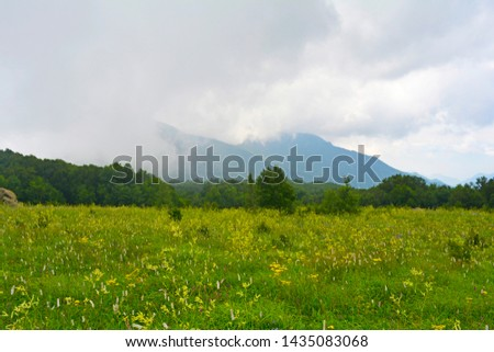 Flowers and cumulus clouds over the alpine meadows of Baihua Mountain Beijing China #1435083068